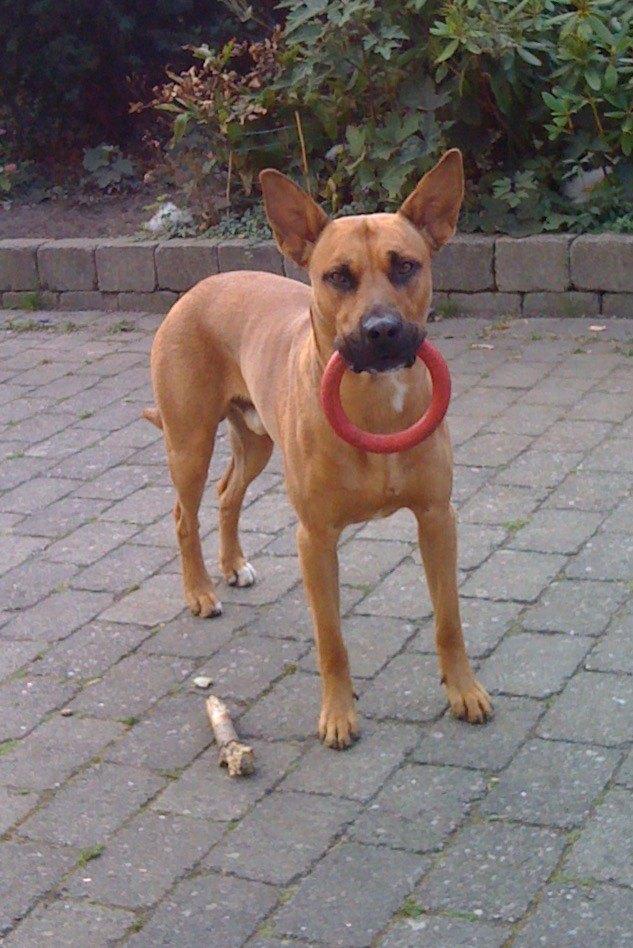 Hjælp til hundeadfærdsproblemer